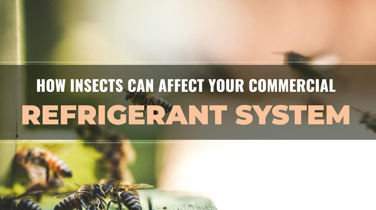 How Insects Can Affect Your Commercial Refrigerant System