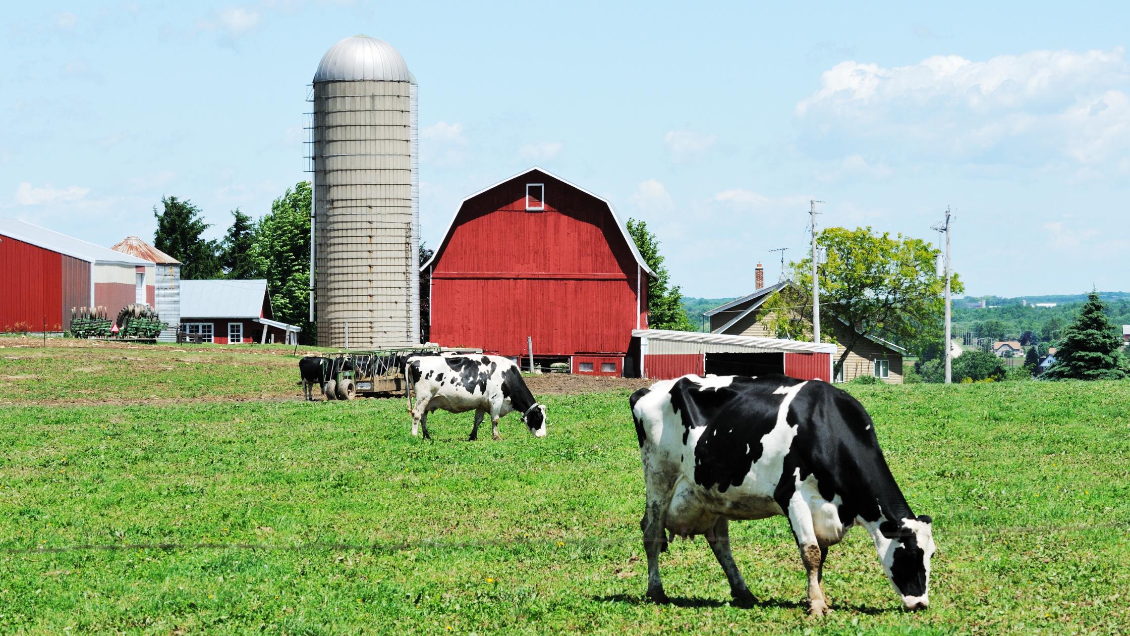 Dairy Refrigeration Compressors