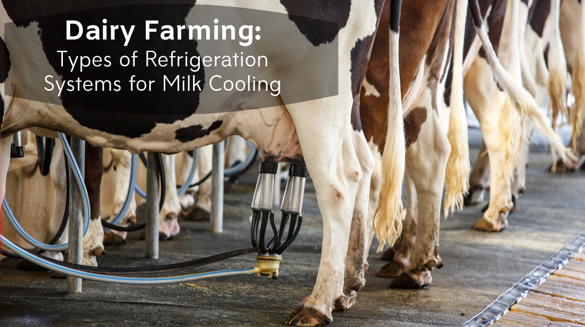 Dairy Farming_ Types of Refrigeration Systems for Milk Cooling